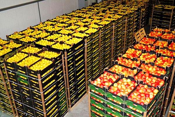 Условия перевозки свежих фруктов и овощей в рефрижераторе